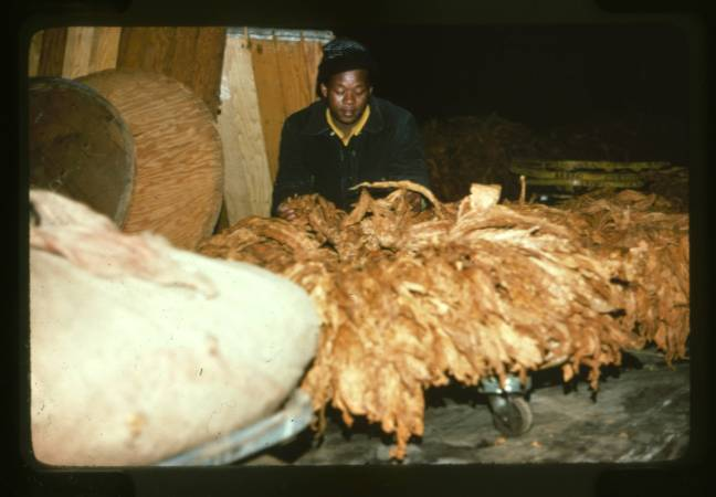 Tobacco_Processing